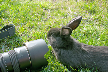 curious rabbit and the camera