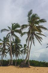 Tropical Paradise. Dominican Republic, Seychelles, Caribbean