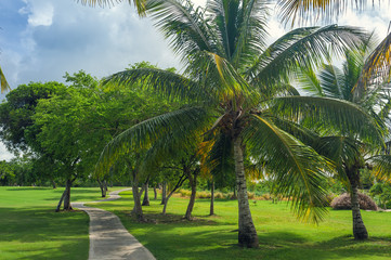 Exotic Palms Beach Resort Grounds. Beautiful Palm tree in