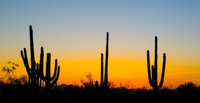 Landscape at sunset in Saguaro National Park, Arizona, USA