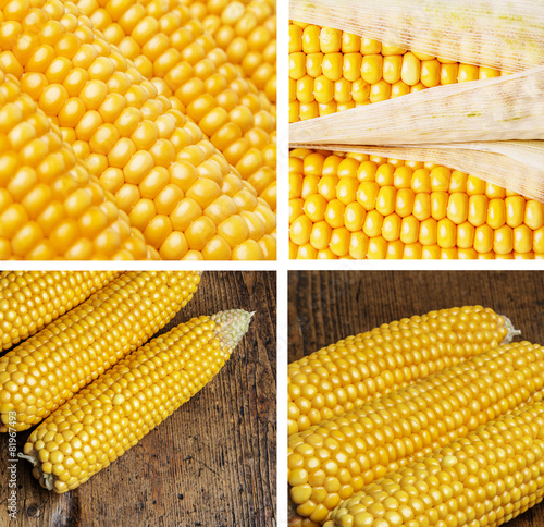 the role of corn in our King corn shows how corn is grown, how it ends up in so many of our foods, and how a fast food nation was born because of this crop.
