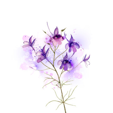 inflorescence larkspur by watercolor Elements