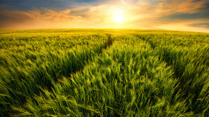 Fotoväggar - Feld führt zur untergehenden Sonne