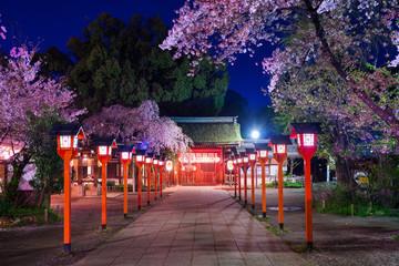 平野神社 灯籠 桜