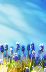art Spring and easter background with spring flowers