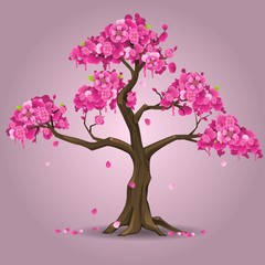 Japanese sakura tree