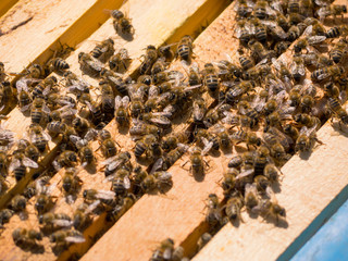 Bees on a hive