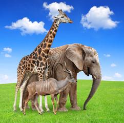 Giraffe with elephant and kudu
