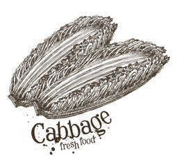 ripe cabbage vector logo design template. fresh vegetables, food
