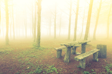 Wood table in forest tree during a foggy day ( Filtered image pr