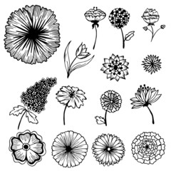 Collection of hand painted flowers background concept
