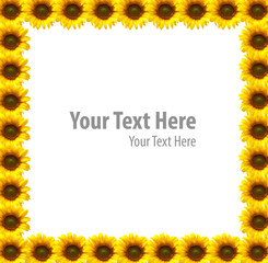 Sun flowers frame background isolated on white