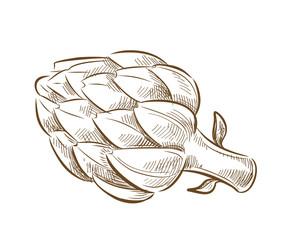 picture of artichoke