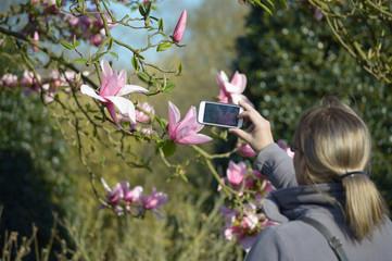 Frau macht ein Handy Foto von magnolia liliiflora