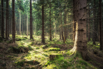 Es grünet der Wald nach dem Winter