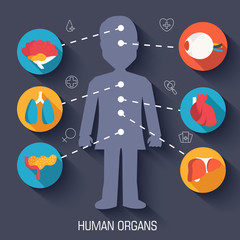 set flat human organs icons illustration infographic concept