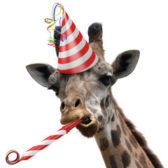 Acrylic Prints Carnaval Funny giraffe party animal making a silly face
