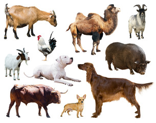 Set of dogs and other farm animals over white