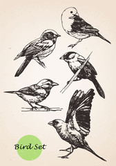 Set of highly detailed hand-drawn birds.Vector.