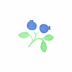 Watercolor blueberry on the white background, aquarelle. Vector