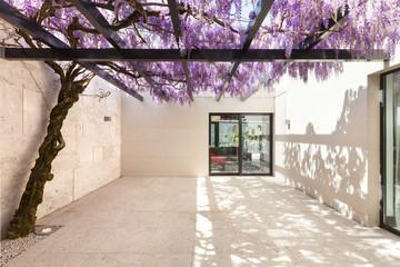 beautiful veranda with wisteria