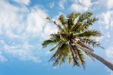 Coconut tree on daylight