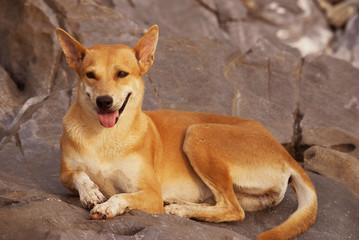 Dog lying on the rocks