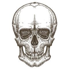 skull vector logo design template. death, disease or zombie icon