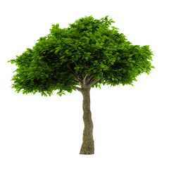 Exotic tree isolated.