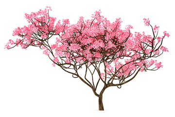 Sakura tree isolated Wall mural