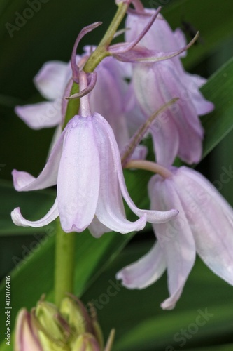 Pink Bell Flowers Stock Photo And Royalty Free Images On Fotolia