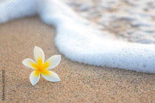 Plumeria Flower on Beach