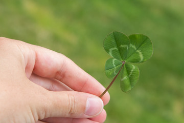 Four-leaf clover in hand horizontal on a green
