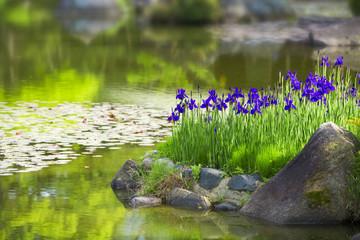 庭園の花菖蒲