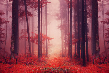 Deurstickers Crimson Red colored foggy forest path