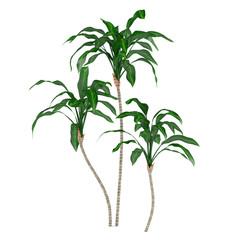 Palm plant tree