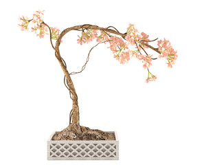 Japan sakura bonsai pot