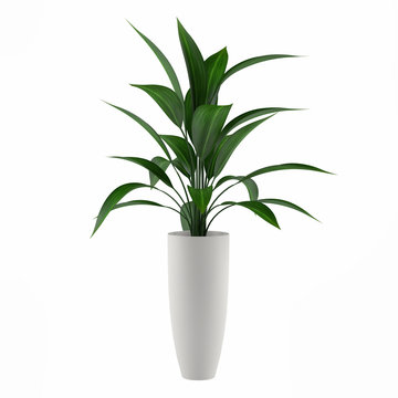 plant isolated in the pot