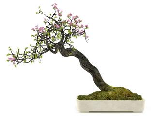 Bonsai flower plant tree in a pot
