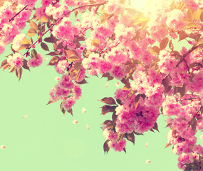 Wall Mural - Spring blossom. Beautiful nature scene with blooming tree