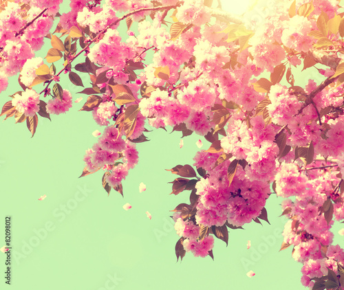 Wall mural Spring blossom. Beautiful nature scene with blooming tree