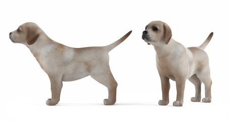 Retriever puppy isolated