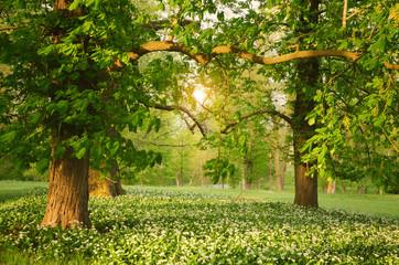 Obraz Sunlight in the green forest springtime - fototapety do salonu