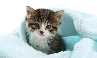 Cute little kitten with towel, on white background