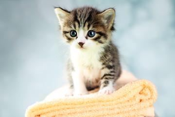 Cute little kitten on towel, on light background