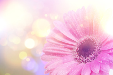 Vintage Gerbera daisy background