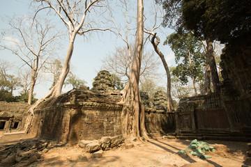 Ta Prohm trees
