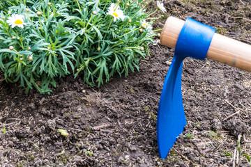 Hoe and margaret flower on soil