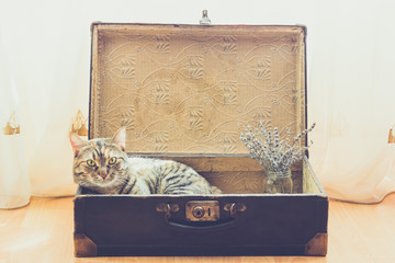 Cat in the old vintage suitcase