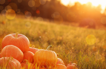 Papiers peints Automne pumpkins outdoor